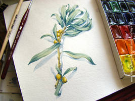 Watercolor Study 02 by Brightway