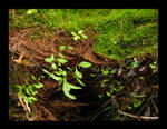 trickling mossy falls