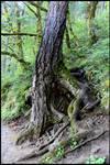 Tree Hideaway I
