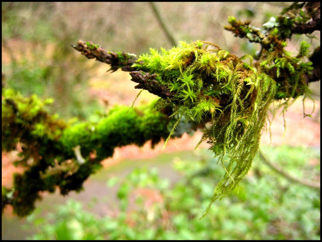 Moss Clump by aelthwyn