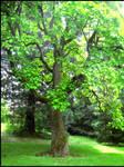 Brilliant Green Tree