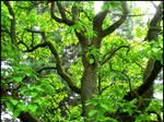 Brilliant Green Tree 2