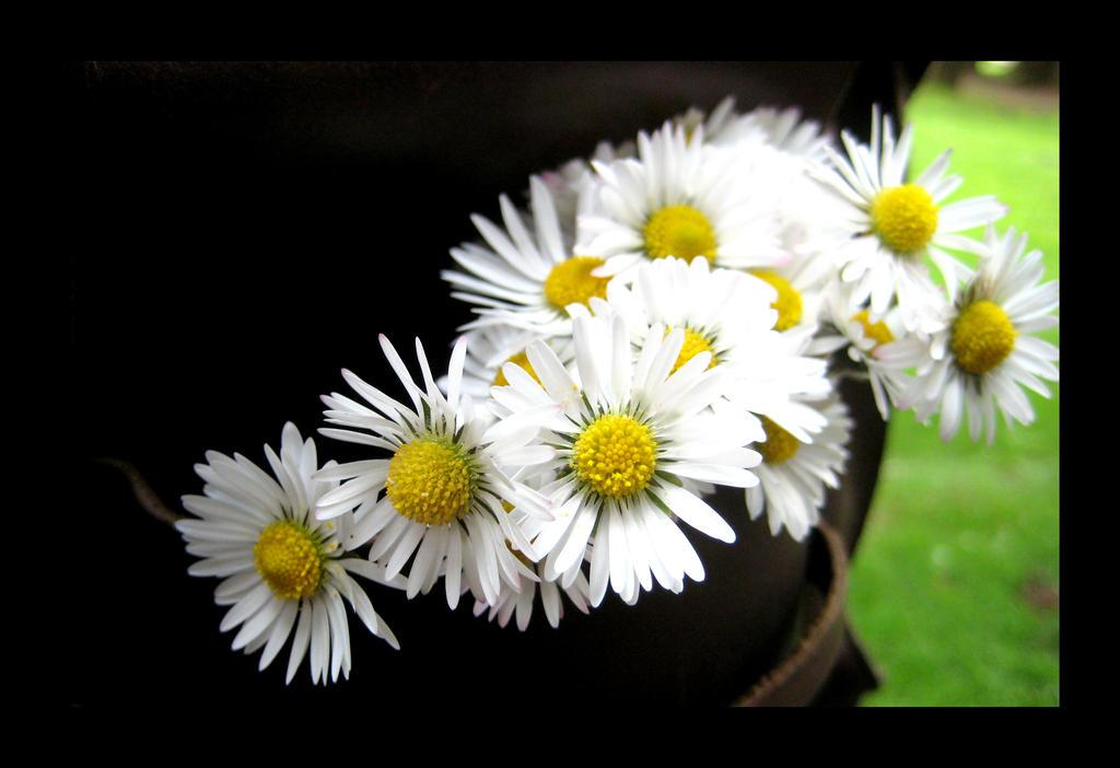 Little Daisy Friends by aelthwyn