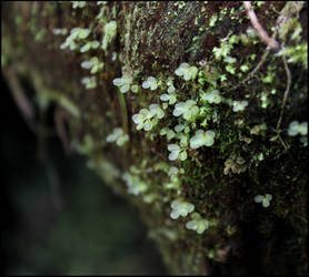 Tiny Transluscent Leaves II by aelthwyn