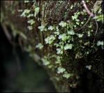 Tiny Transluscent Leaves II