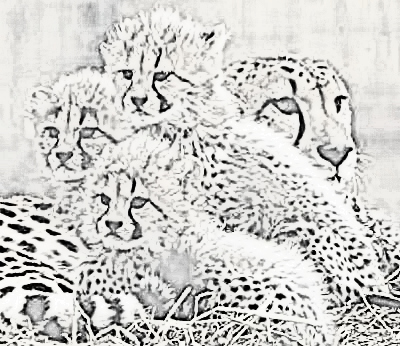 Cheetah Family Coloring Page