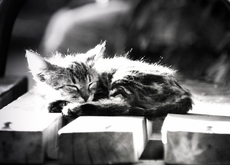 Sleeepy cat by apopov