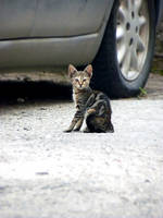 the cat from my street