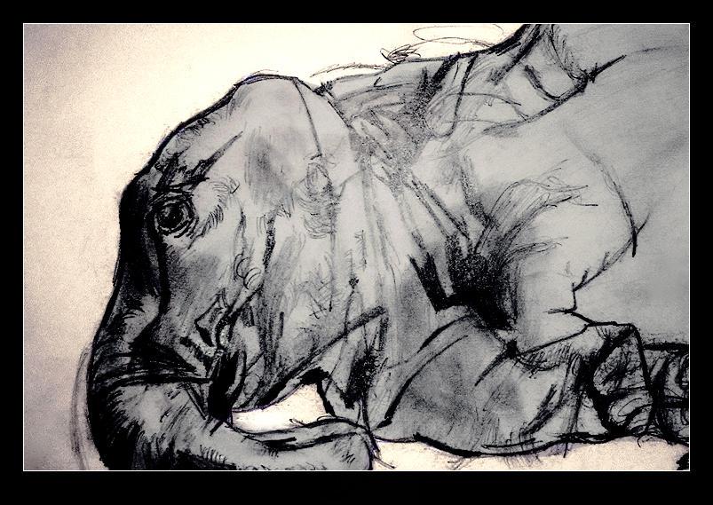Elephant by sid