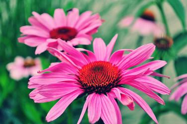 Flowers l Last take l