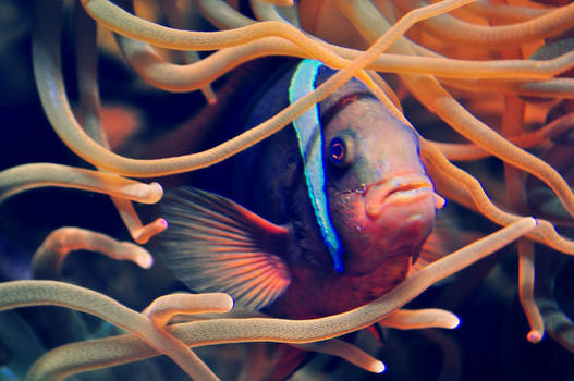 Mr Fish