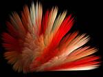 Feathery Fun