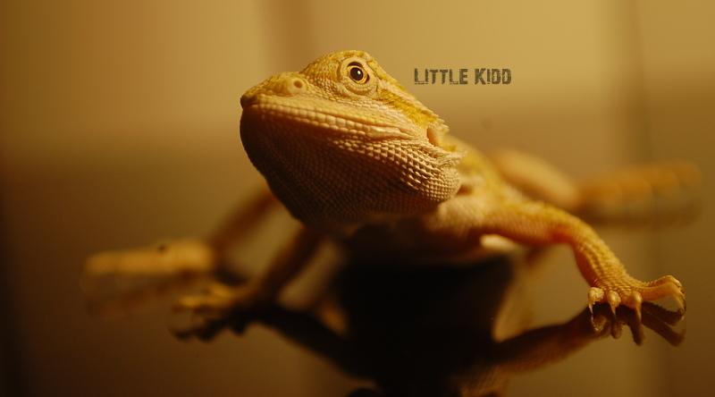 Cattivo by LittleKidd