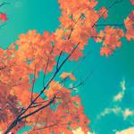 October Sky by sweet-reality-xo