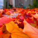 fallen leaves by sweet-reality-xo