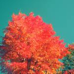 fall trees.. by sweet-reality-xo