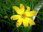 Yellow Flower VII