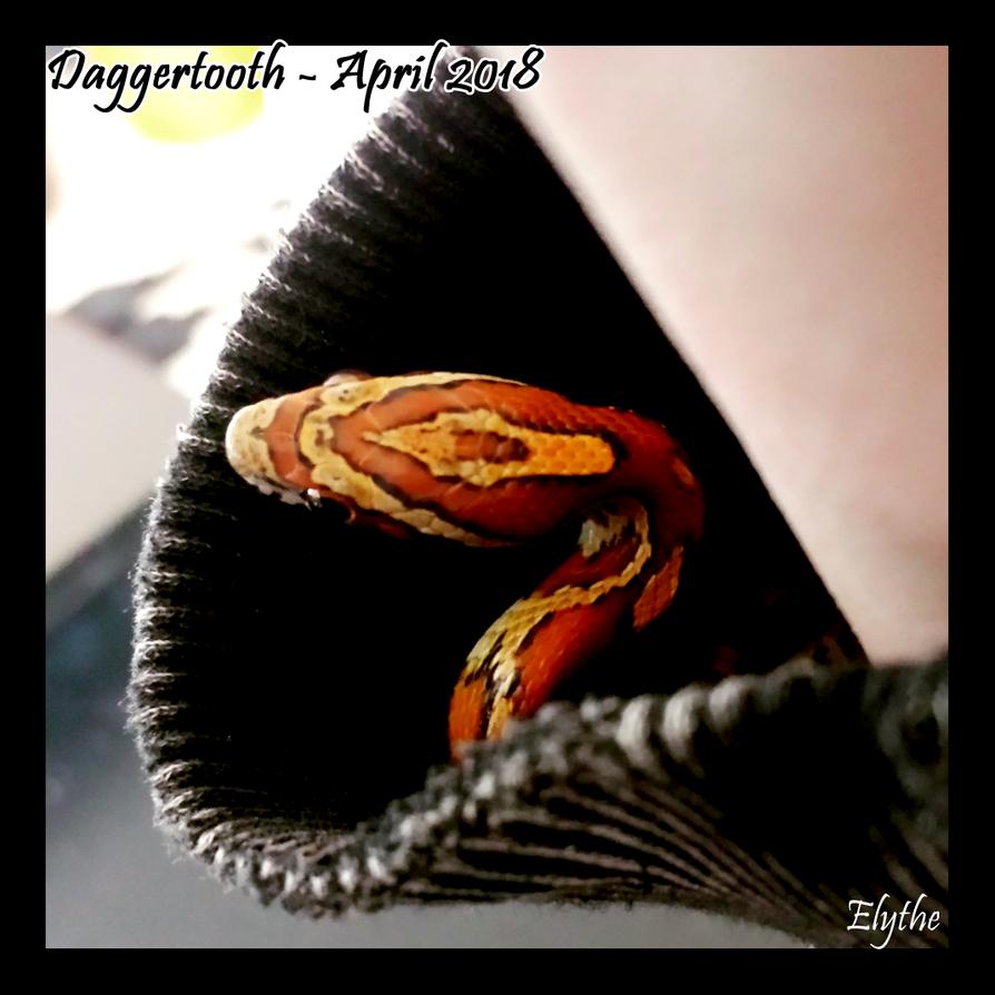 Daggertooth - April 2018 by EllisPhotobox