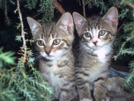Kittens by katiebobbaseball11