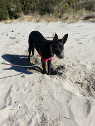 Bella's first time at the beach