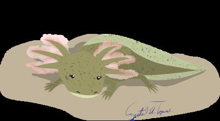 Freckles the Axolotl