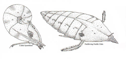 Vernal Pool Creatures by salpfish1