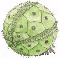 Ball Urchin by salpfish1