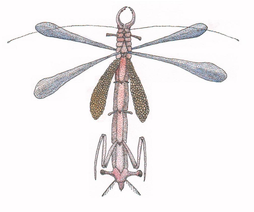 Shrimpbat
