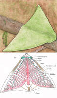Flying Leafworm