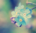 Small, Fragile and Blue