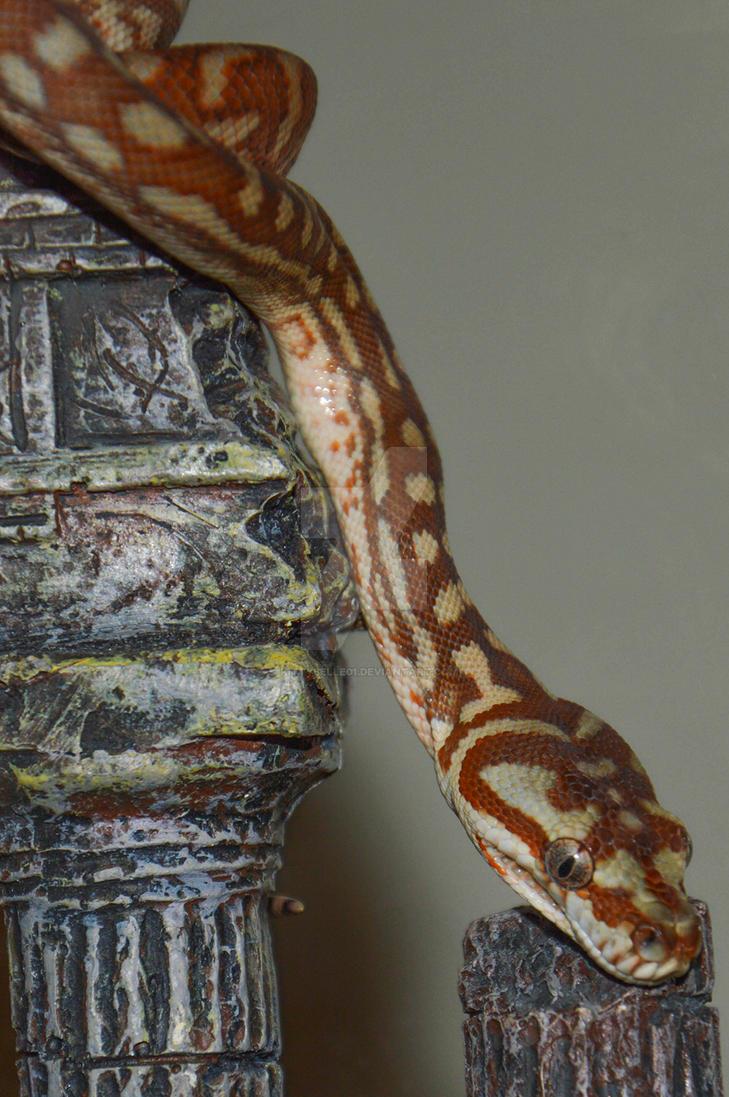 hypomelanistic bredli python by KittyBelle01