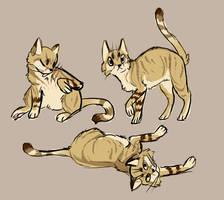 cats? cats. by catarazzo