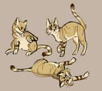 cats? cats.