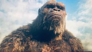 Kong Seeing Godzilla Go away