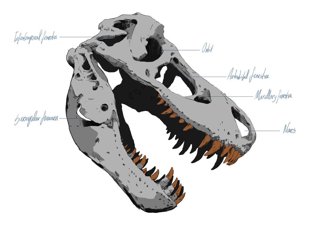 T-Rex skull by Samize