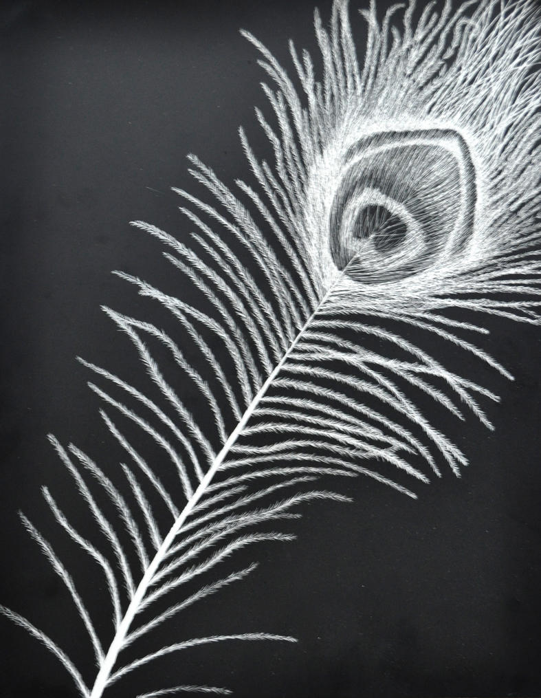 Peacock Feather by Sarah248 on DeviantArt