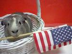 piggy can't wait till 4TH of July!