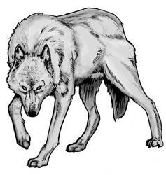 Wolf Study Part 3.1 by Kryptoniteking