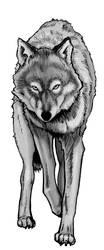 Wolf Study Part 3.3 by Kryptoniteking