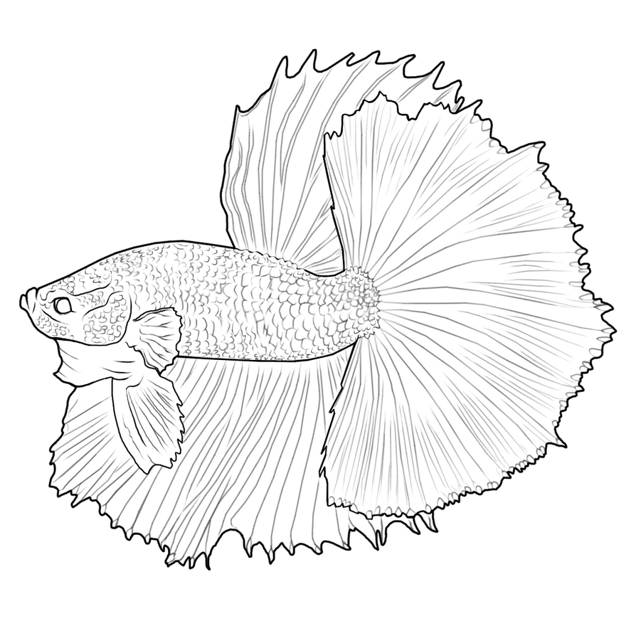 Image Result For Fish Coloring Page