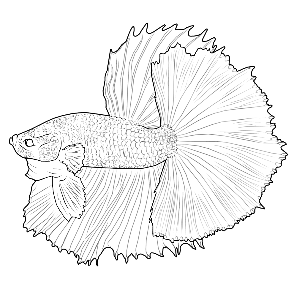 Digital betta painting and free lines betta fish and for Betta fish care sheet