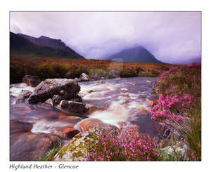 Highland Heather - Glencoe