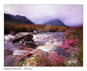 Highland Heather - Glencoe