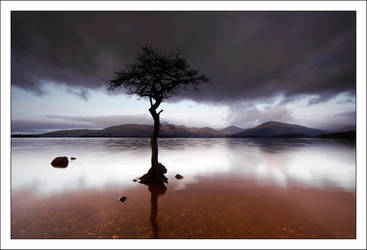 Milarrochy Tree by DL-Photography