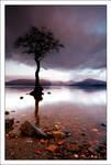 Milarrochy Tree V0.1
