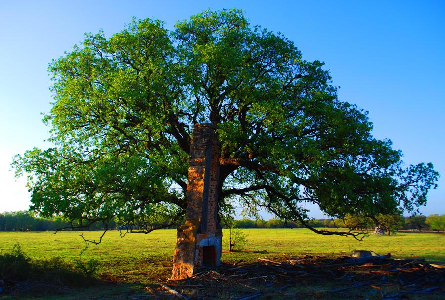 Chimney Tree by SublimeBudd