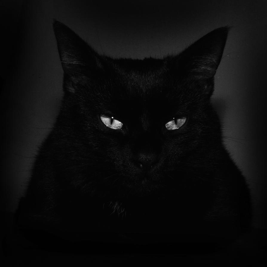 Black Cat by SublimeBudd