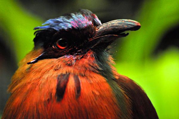 BIRD by SublimeBudd