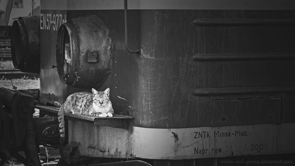 Train Cat By Mishu Evil Genius On Deviantart