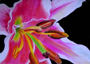 Flower by tschtsch